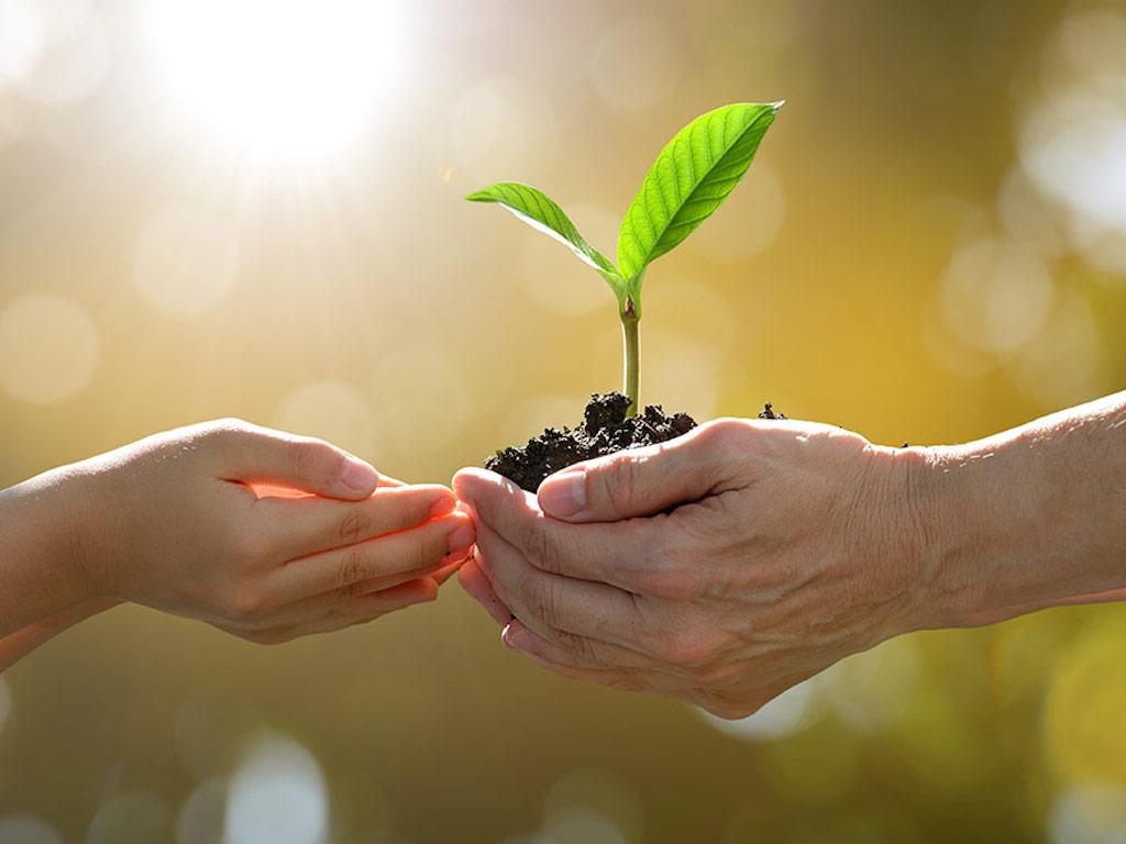 planting-envanto-elements
