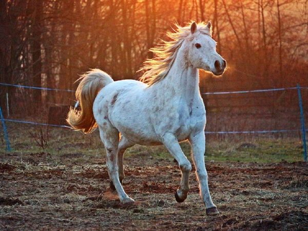 Dreaming_about_a_horse