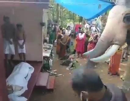 elephant death (4)